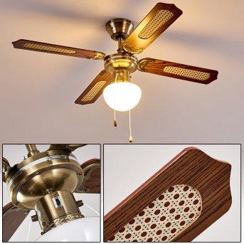 Ventilateurs de Plafond Morea Bois foncé, Vieux laiton, 1 lumière